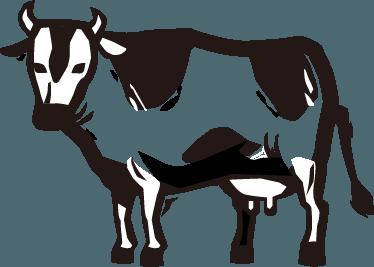 北海道産有機生乳