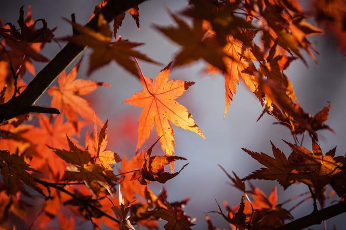 秋真っ盛り、紅葉を愛でた後は、「ミライザカ」で楽しい時間をどうぞ