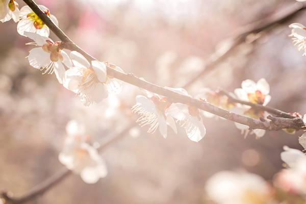 もうすぐ立春、「立春」の意味をバンタロウがレクチャー!