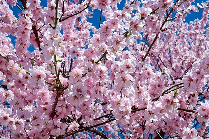 新宿御苑でお花見はいかが? そして、花見の後は「ミライザカ」へ!