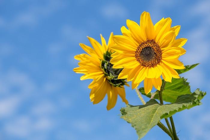 7月23日は「最高気温記念日」!暑い日はひんやりハイボールはいかが?