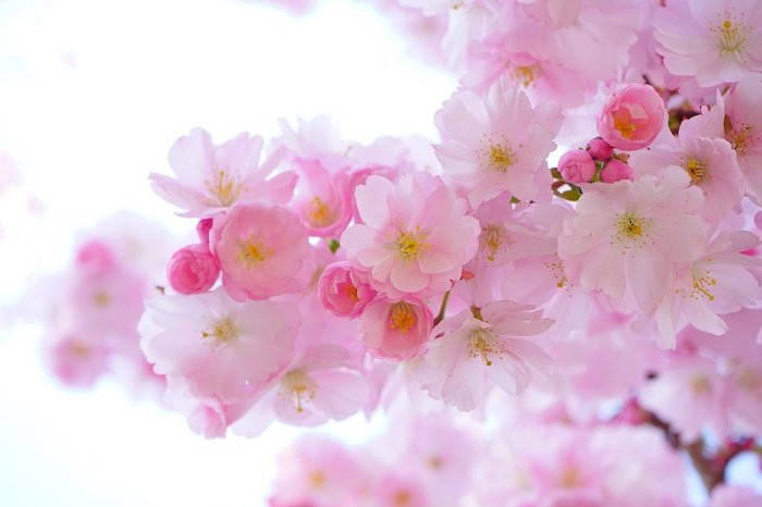 全国お花見の名所はここ! おすすめのスポットをご紹介